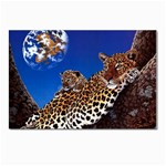 2-74-Animals-Wildlife-1024-007 Postcard 4 x 6  (Pkg of 10)