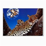 2-74-Animals-Wildlife-1024-007 Postcards 5  x 7  (Pkg of 10)