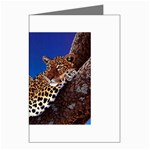2-74-Animals-Wildlife-1024-007 Greeting Card