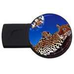 2-74-Animals-Wildlife-1024-007 USB Flash Drive Round (1 GB)