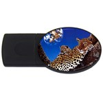 2-74-Animals-Wildlife-1024-007 USB Flash Drive Oval (1 GB)