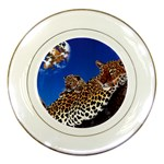 2-74-Animals-Wildlife-1024-007 Porcelain Plate