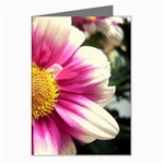 wallpaper_19674 Greeting Cards (Pkg of 8)