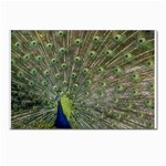 bird_15 Postcards 5  x 7  (Pkg of 10)