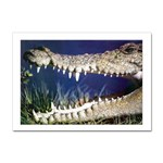 Croc Sticker A4 (10 pack)