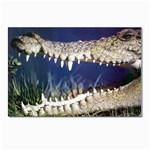 Croc Postcard 4 x 6  (Pkg of 10)