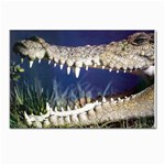 Croc Postcard 5  x 7