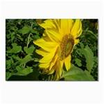 flowers_30 Postcard 4  x 6