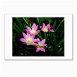 landat_02 Postcards 5  x 7  (Pkg of 10)