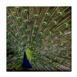 bird_15 Tile Coaster