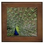 bird_15 Framed Tile
