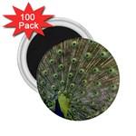 bird_15 2.25  Magnet (100 pack)