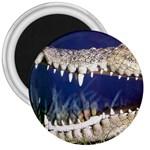 Croc 3  Magnet