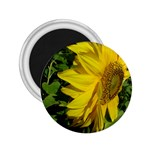 flowers_30 2.25  Magnet