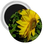 flowers_30 3  Magnet