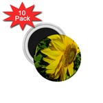 flowers_30 1.75  Magnet (10 pack)