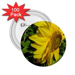 flowers_30 2.25  Button (100 pack)