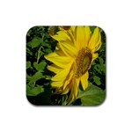flowers_30 Rubber Square Coaster (4 pack)