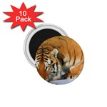 tiger_4 1.75  Magnet (10 pack)