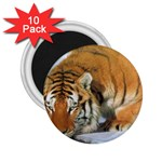 tiger_4 2.25  Magnet (10 pack)