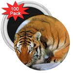 tiger_4 3  Magnet (100 pack)