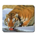 tiger_4 Large Mousepad