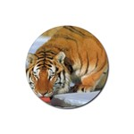tiger_4 Rubber Coaster (Round)