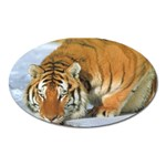 tiger_4 Magnet (Oval)