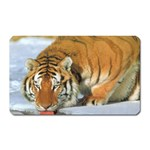 tiger_4 Magnet (Rectangular)