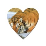 tiger_4 Magnet (Heart)
