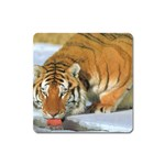 tiger_4 Magnet (Square)