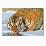 tiger_4 Postcard 4 x 6  (Pkg of 10)