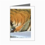 tiger_4 Mini Greeting Card