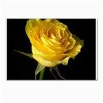 wallpaper_11217 Postcards 5  x 7  (Pkg of 10)