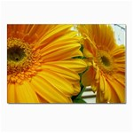wallpaper_18294 Postcard 4 x 6  (Pkg of 10)