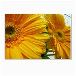 wallpaper_18294 Postcards 5  x 7  (Pkg of 10)