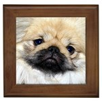 Shih Tzu Gifts, Dog Merchandise, Custom Dog Gift Ideas, Breed Information & Dog Photos