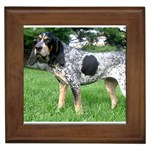 Bluetick Coonhound Gifts, Dog Merchandise, Custom Dog Gift Ideas, Breed Information & Dog Photos