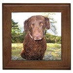 Curly Coated Retriever Gifts, Dog Merchandise, Custom Dog Gift Ideas, Breed Information & Dog Photos
