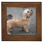 Dandie Dinmont Terrier Gifts, Dog Merchandise, Custom Dog Gift Ideas, Breed Information & Dog Photos