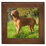 Dogue De Bordeaux Gifts, Dog Merchandise, Custom Dog Gift Ideas, Breed Information & Dog Photos