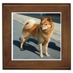 Finnish Spitz Gifts, Dog Merchandise, Custom Dog Gift Ideas, Breed Information & Dog Photos
