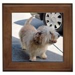 Glen Of Imaal Terrier Gifts, Dog Merchandise, Custom Dog Gift Ideas, Breed Information & Dog Photos