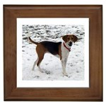 Harrier Gifts, Dog Merchandise, Custom Dog Gift Ideas, Breed Information & Dog Photos