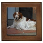 Irish Red And White Setter Gifts, Dog Merchandise, Custom Dog Gift Ideas, Breed Information & Dog Photos