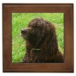 Irish Water Spaniel Gifts, Dog Merchandise, Custom Dog Gift Ideas, Breed Information & Dog Photos