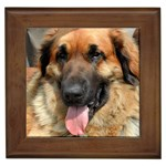 Leonberger Gifts, Dog Merchandise, Custom Dog Gift Ideas, Breed Information & Dog Photos