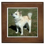 Norwegian Buhund Gifts, Dog Merchandise, Custom Dog Gift Ideas, Breed Information & Dog Photos