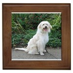 Pyrenean Shepherd Gifts, Dog Merchandise, Custom Dog Gift Ideas, Breed Information & Dog Photos
