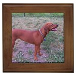 Redbone Coonhound Gifts, Dog Merchandise, Custom Dog Gift Ideas, Breed Information & Dog Photos
